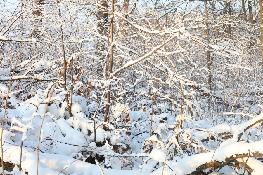 God's creation: snow in the forest in Lviv region, December 2012, photo 11