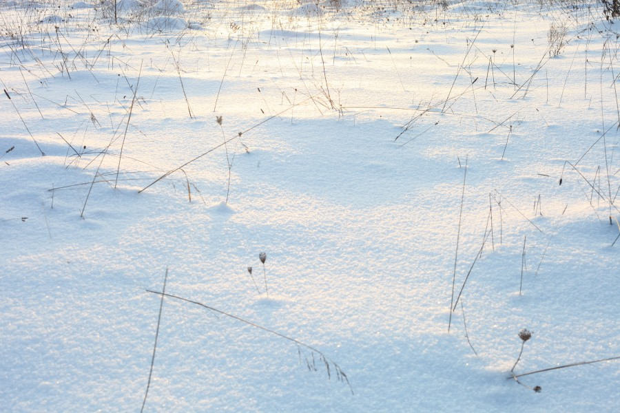 God's creation: snow on the meadow in the evening in Lviv region, December 2012, photo 13