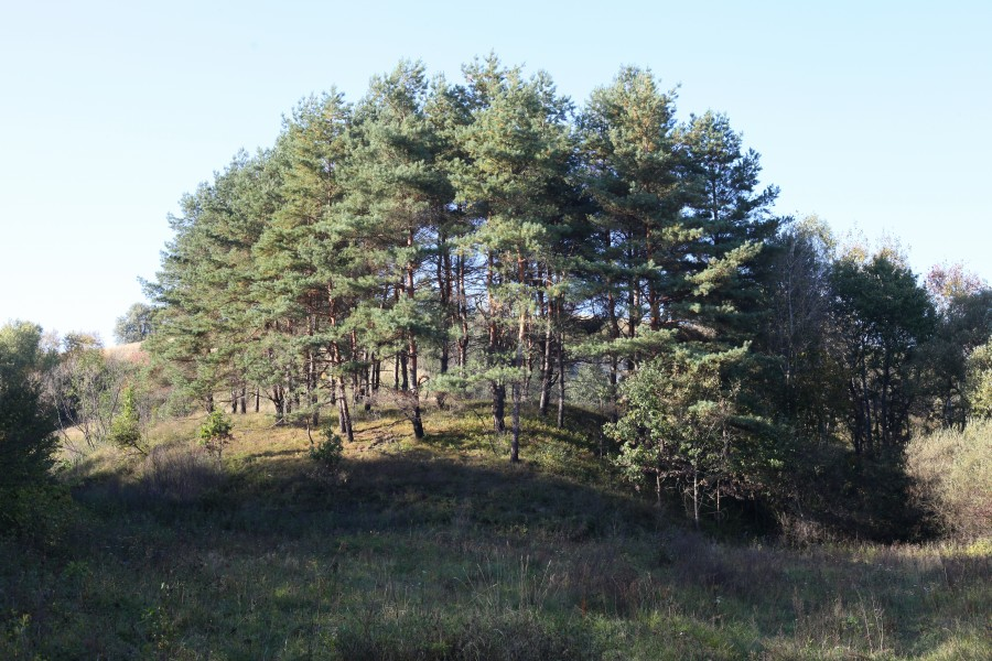 trees on a hill in the beginning of October 2012 in Lviv region of Ukraine