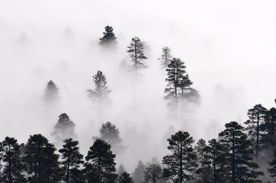 Trees in the mist (7699666560)