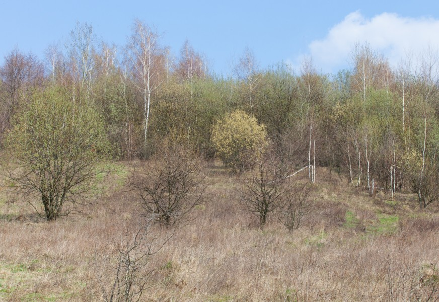 trees with first young leaves in Lviv region of Ukraine in March 2014
