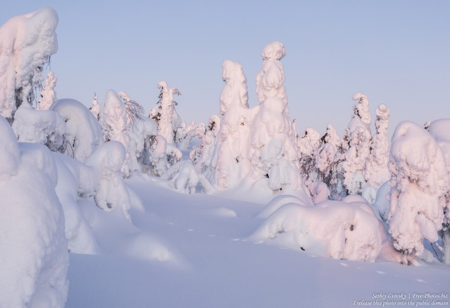 Valtavaara, Finland, photographed in January 2020 by Serhiy Lvivsky, picture 10