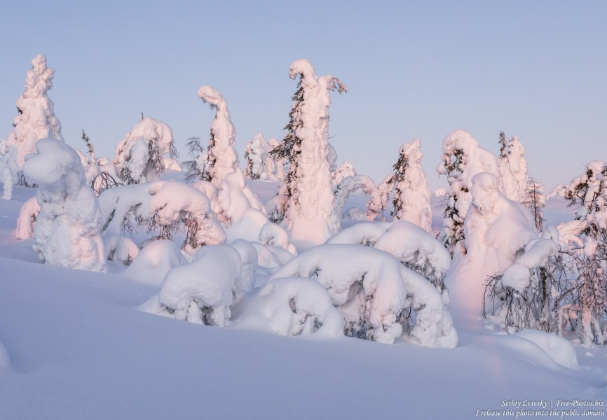Valtavaara, Finland, photographed in January 2020 by Serhiy Lvivsky, picture 12