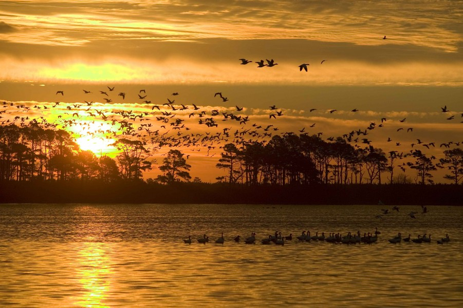 Waterfowl grace the skies at sunset