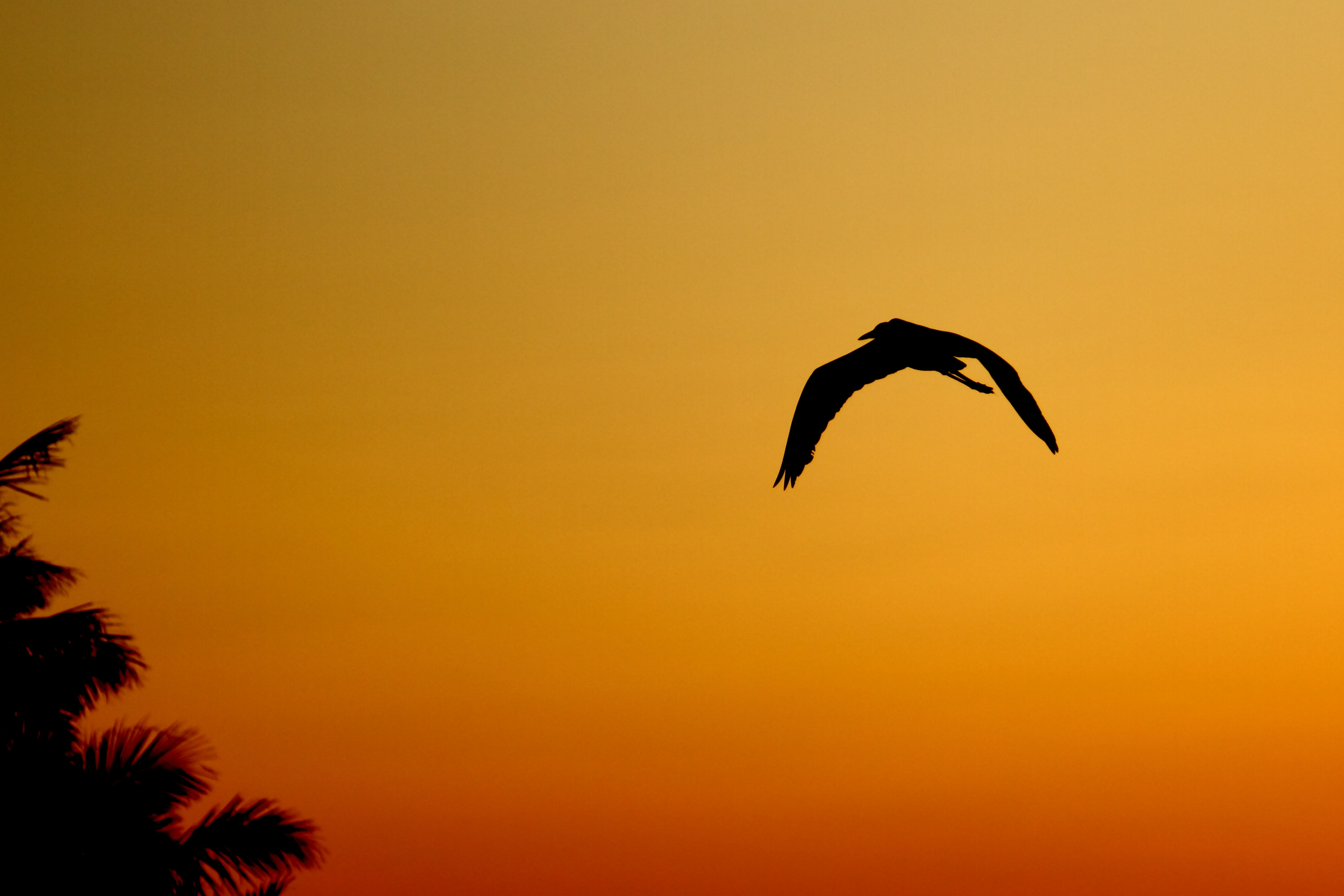 Sunset Flight (4446056174)