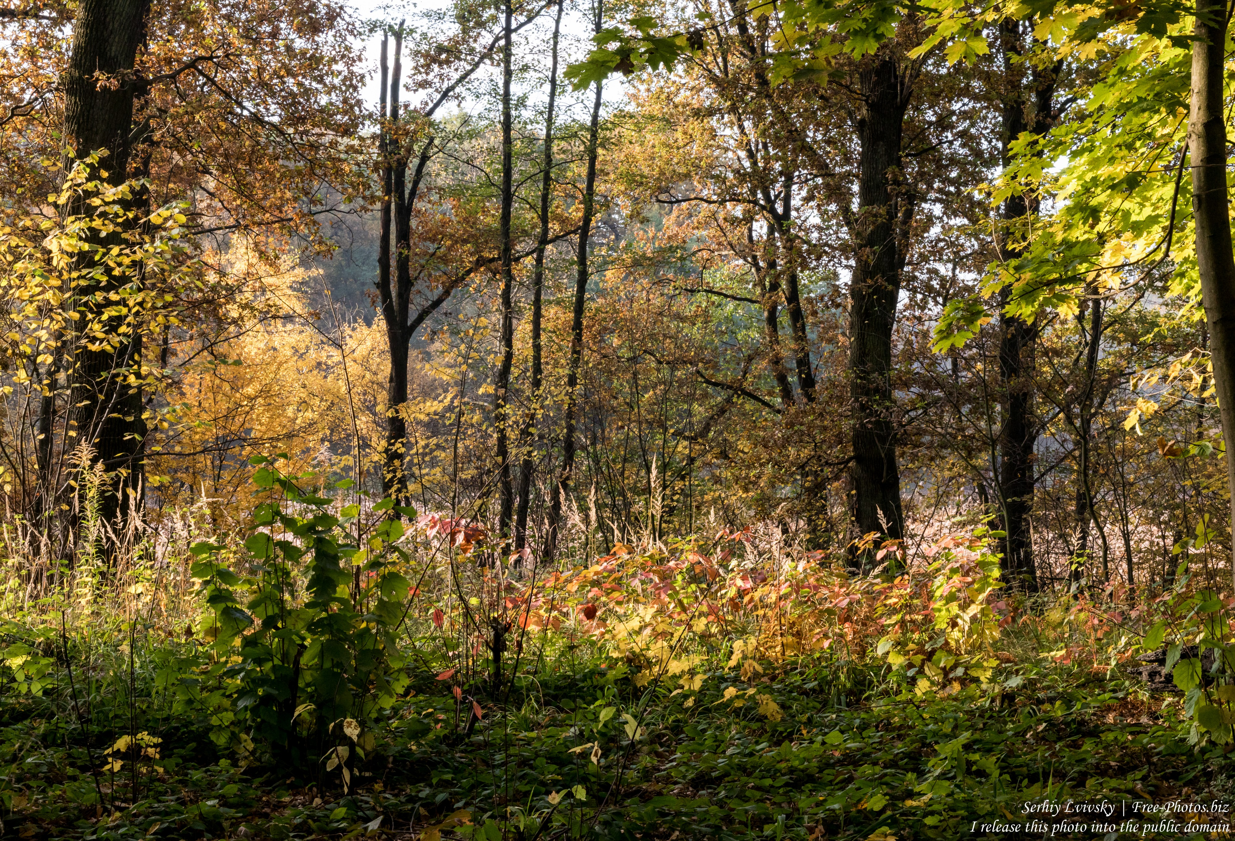 nature in Lviv region of Ukraine photographed in October 2019 by Serhiy Lvivsky, picture 1