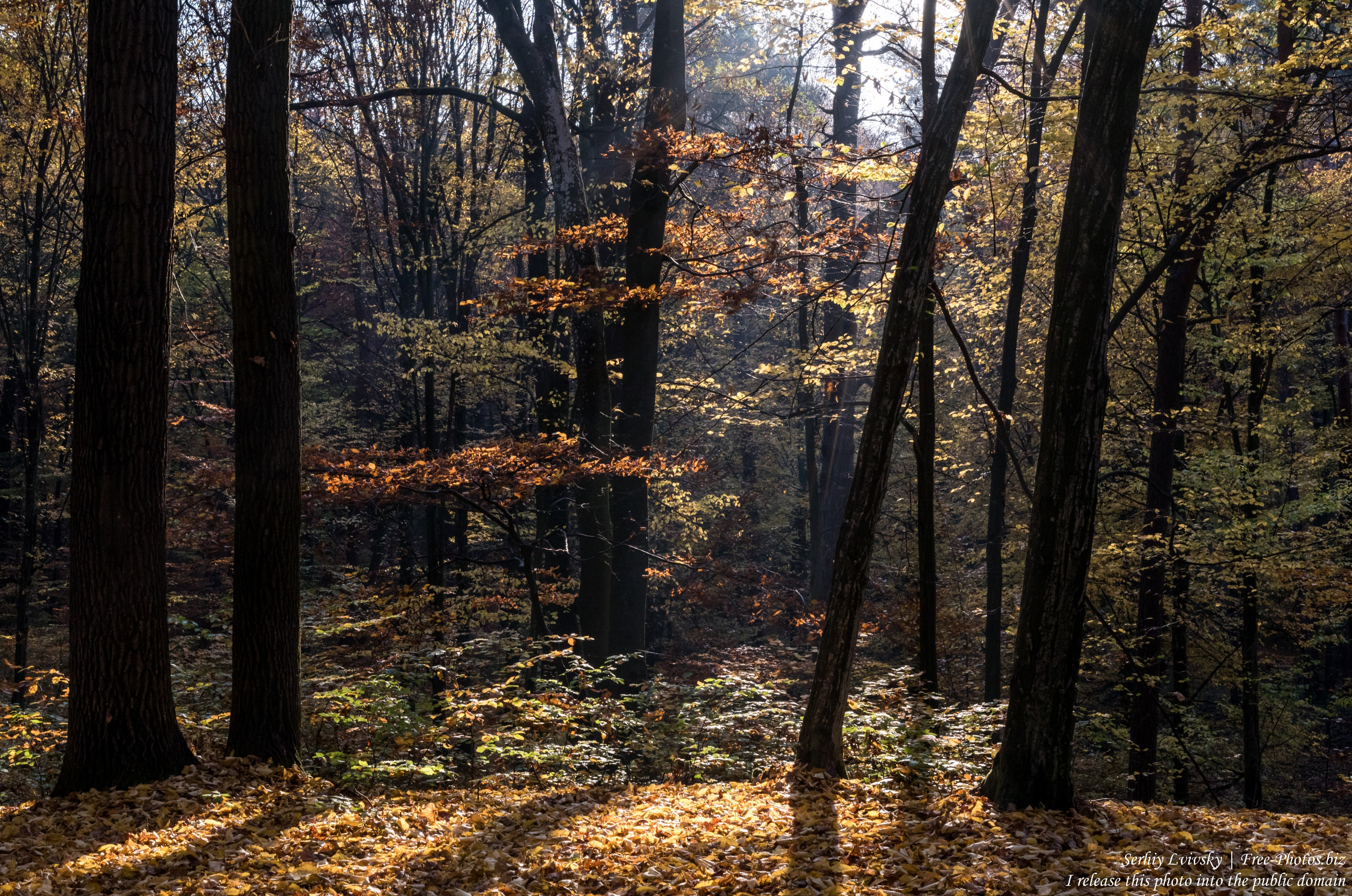 nature in Lviv region of Ukraine photographed in October 2019 by Serhiy Lvivsky, picture 3