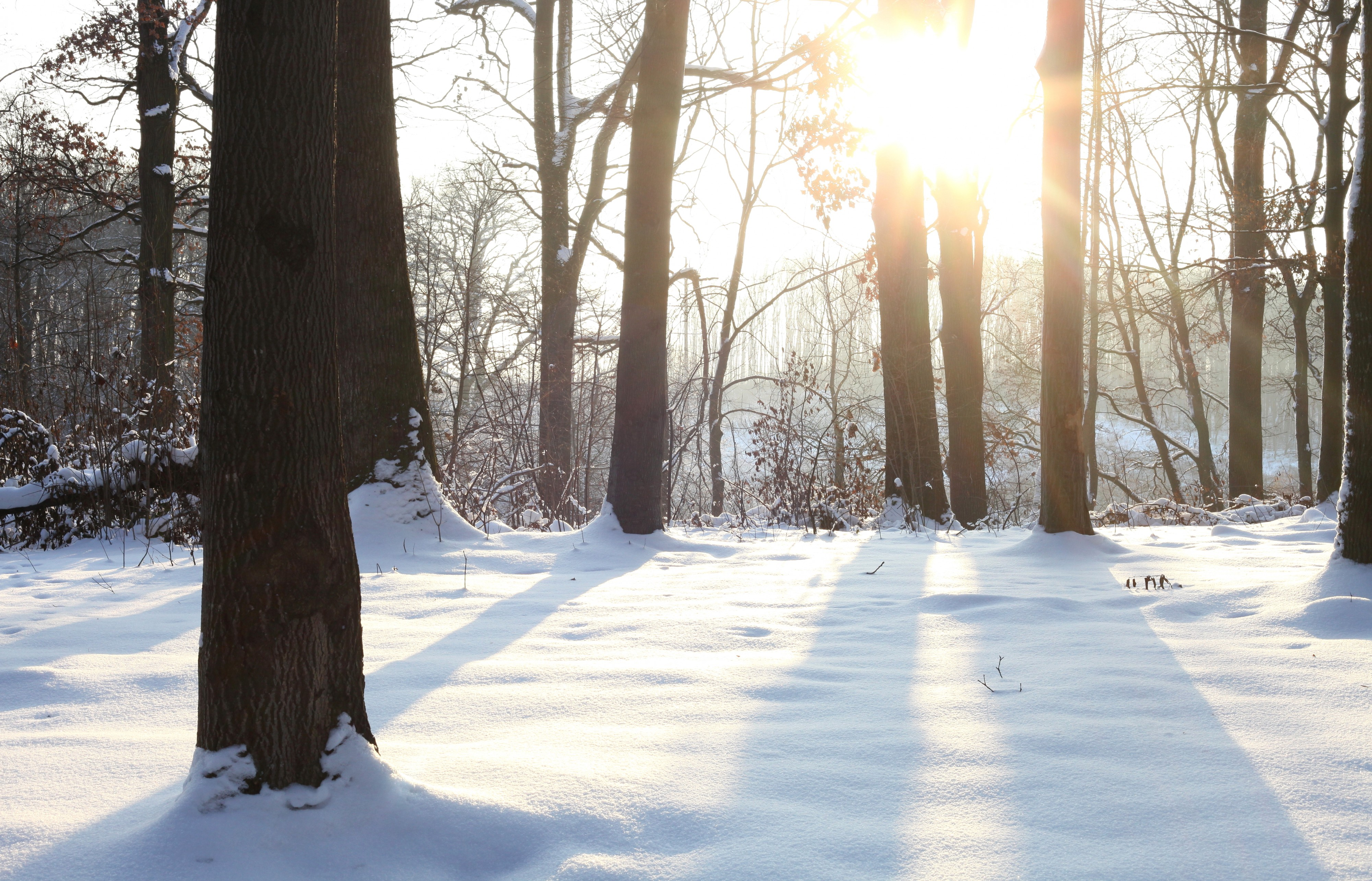 God's creation: snow in the forest in Lviv region, picture 5