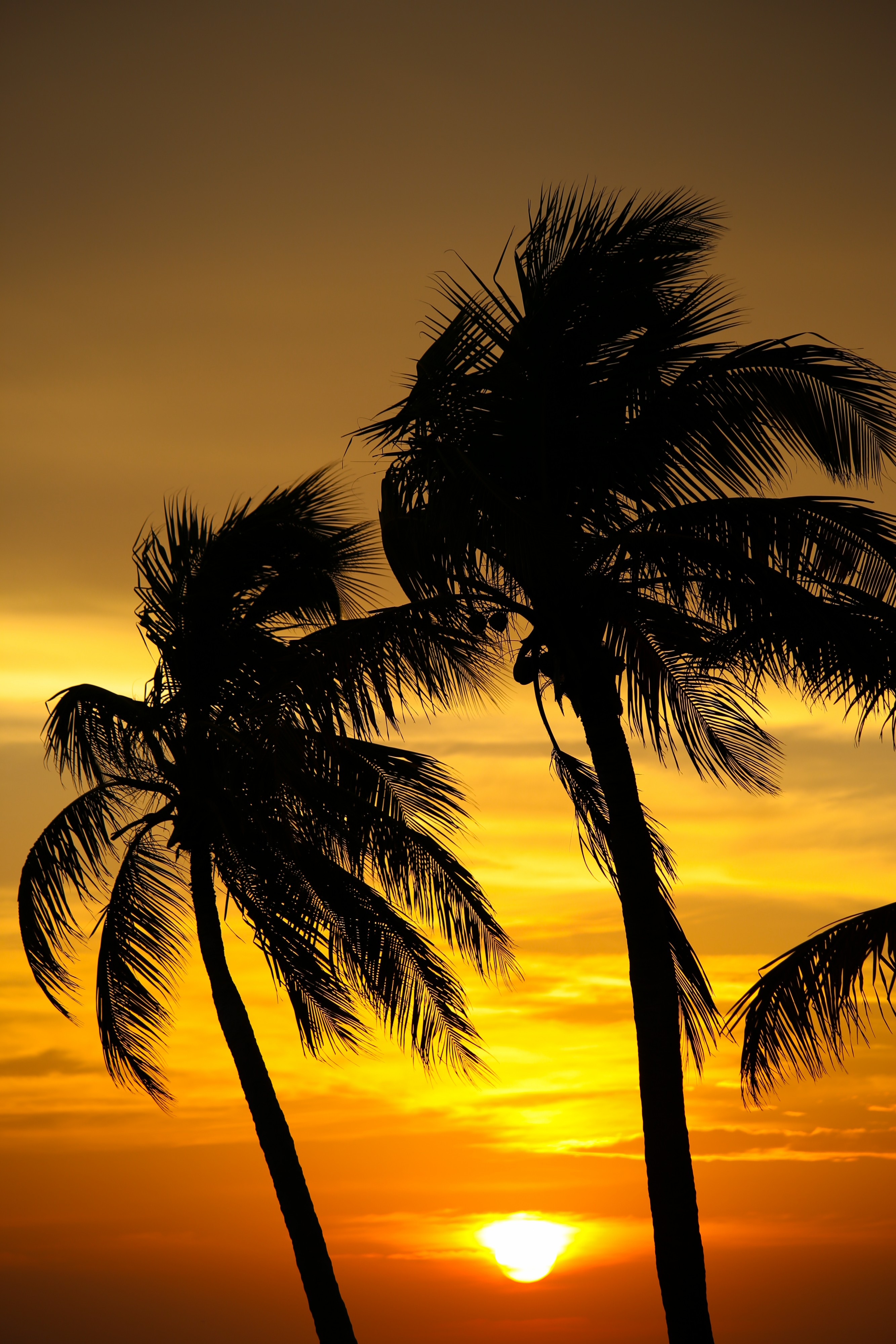 Sunset on Smathers Beach, Key West - Flickr - Joe Parks