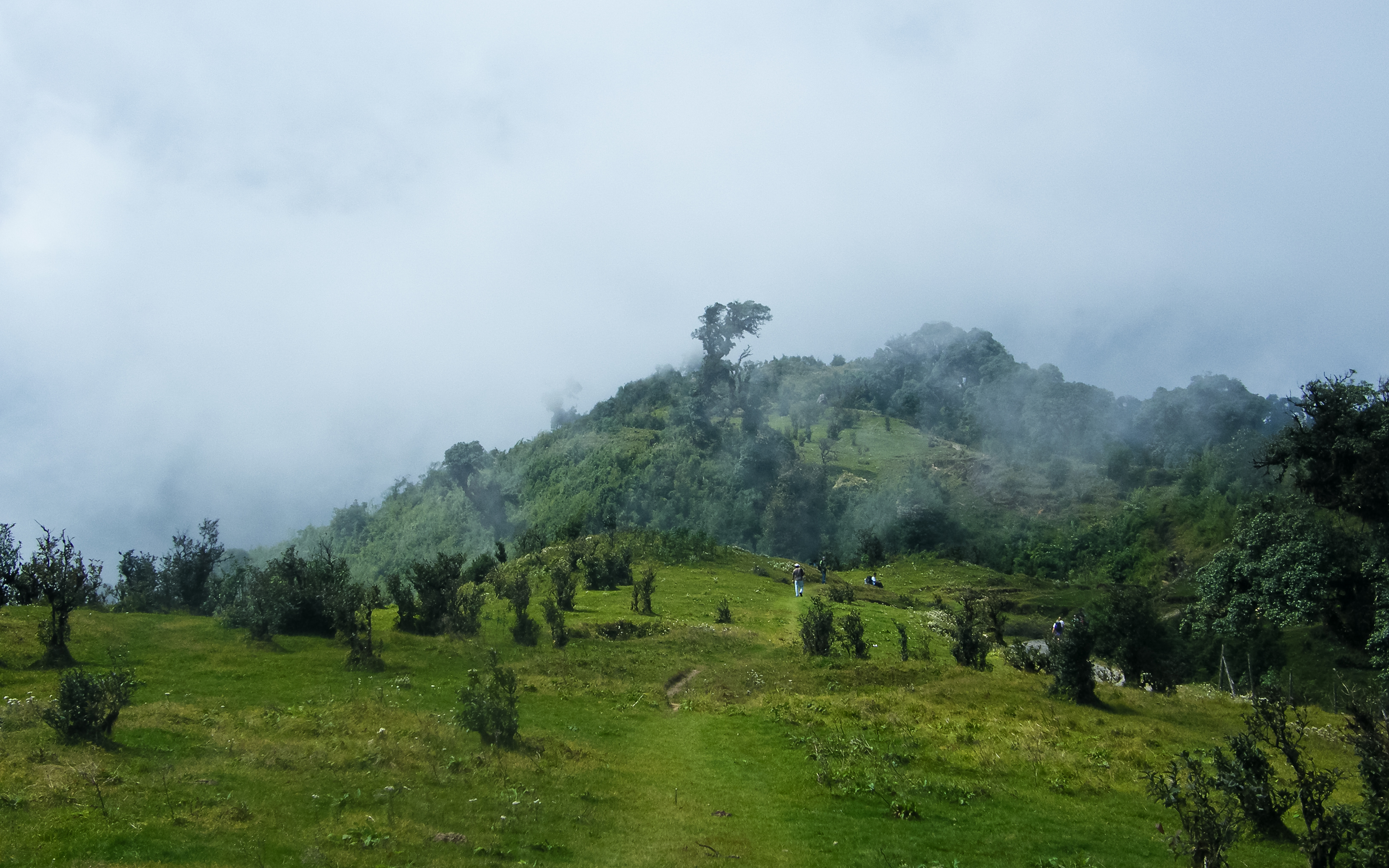Vast green meadows and hills in Singalila National Park