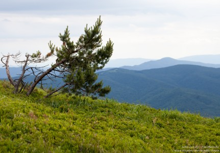 Bieszczady mountains, Poland, photographed in July 2017 by Serhiy Lvivsky, picture 5