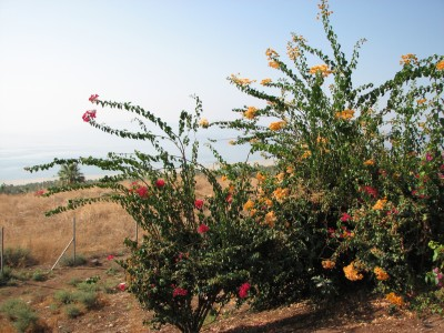The Mount of Beatitudes, Israel, photo 9.
