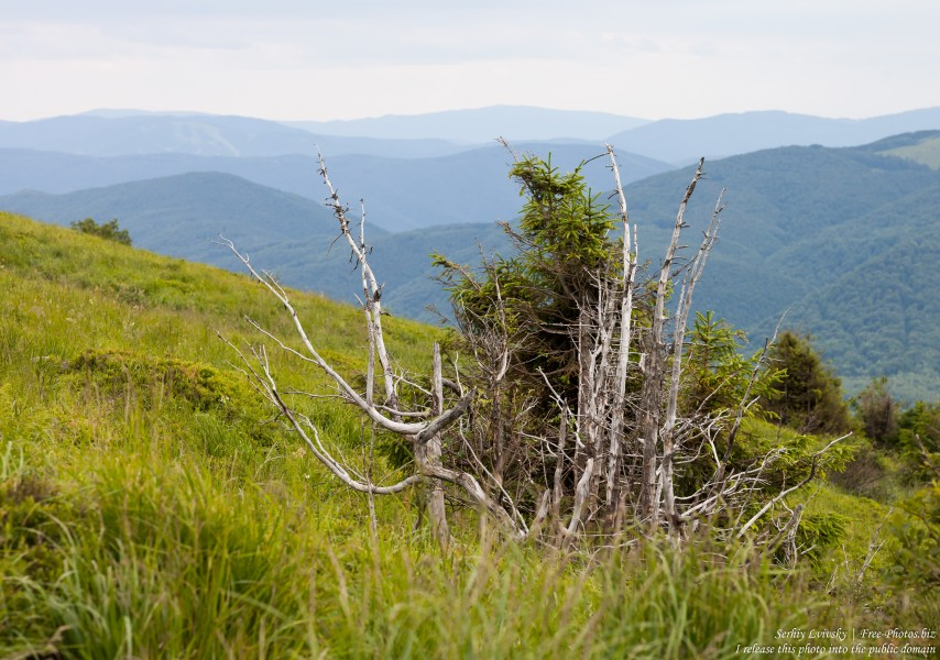 Bieszczady mountains, Poland, photographed in July 2017 by Serhiy Lvivsky, picture 6