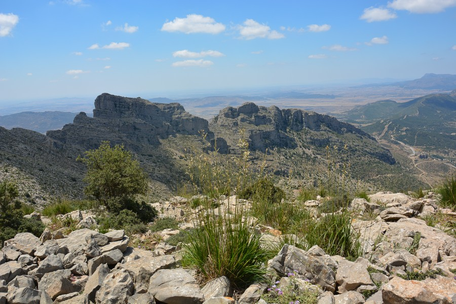 Parc National de Jabal Zaghouan 172