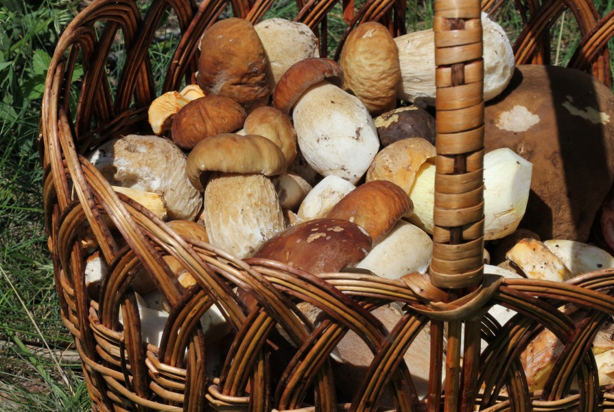 Edible fungi in basket 2013 G3