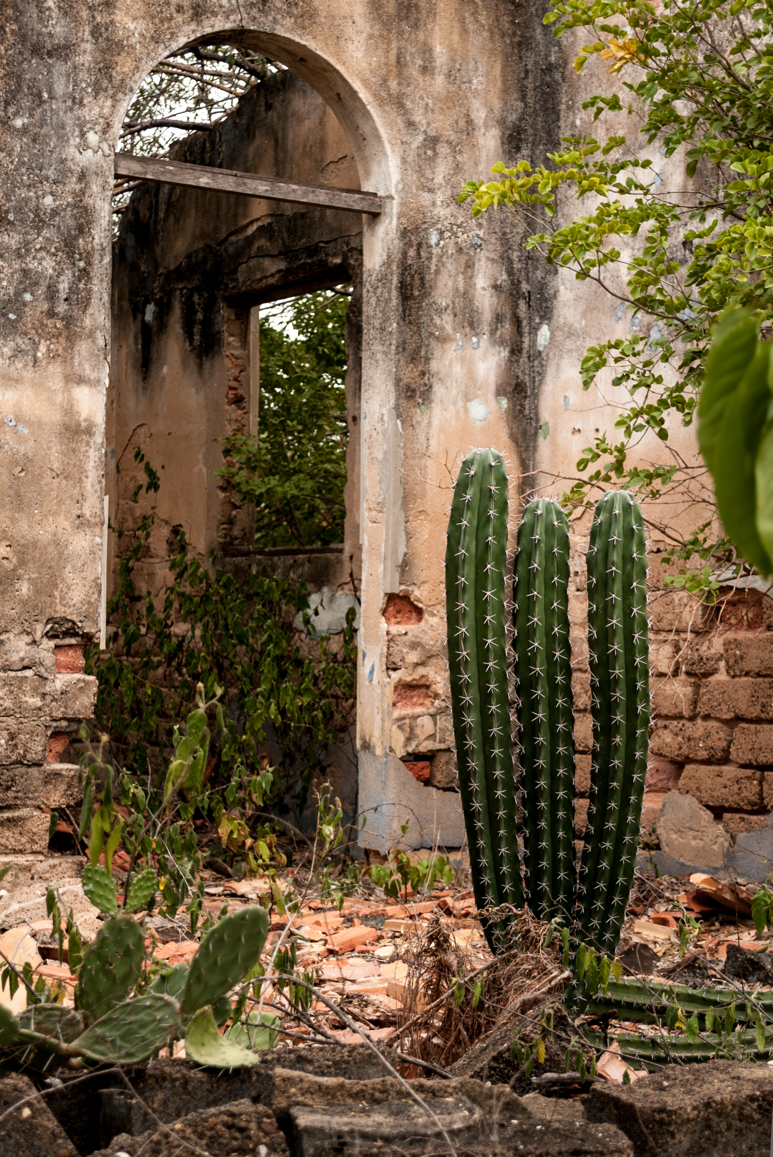 Abandoned house in the former lepers Island, Lake Maracaibo 3