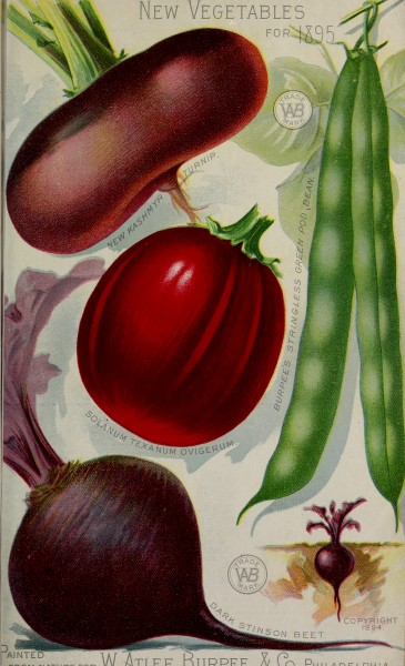 Burpee's farm annual - the best seeds that grow including rare novelties (1895) (19887803734)