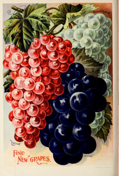 Childs' rare flowers, vegetables, and fruits (1902) (20420078769)