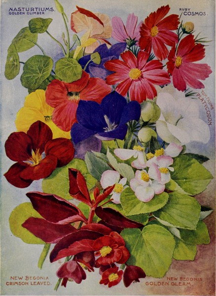 Childs' rare flowers, vegetables, and fruits (1903) (20606567885)