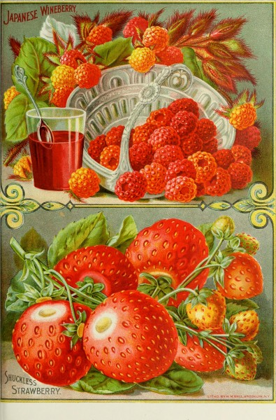 Childs' rare flowers, vegetables and fruits for 1895 (1895) (14595165747)