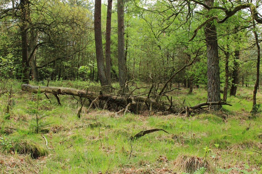 Nationaal Park Drents-Friese Wold 03