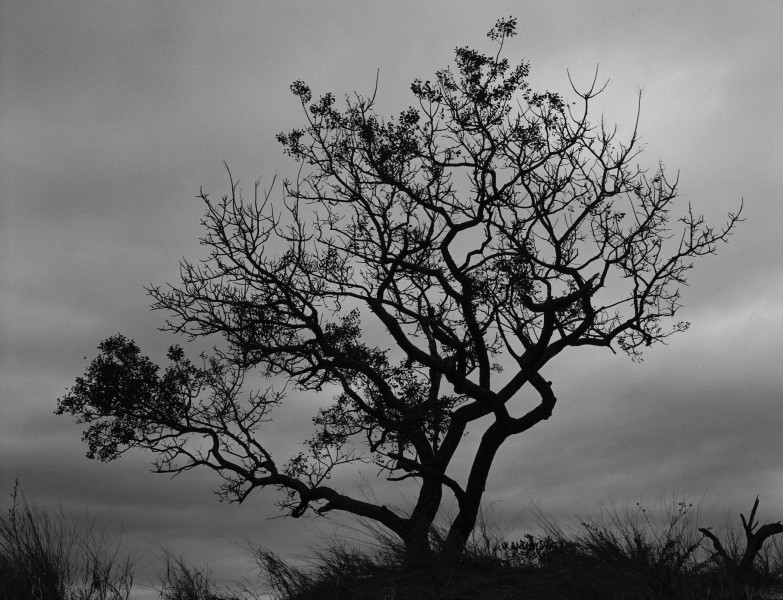 Tree at Earth Lodge (Sabi Sabi Lodge, South Africa)