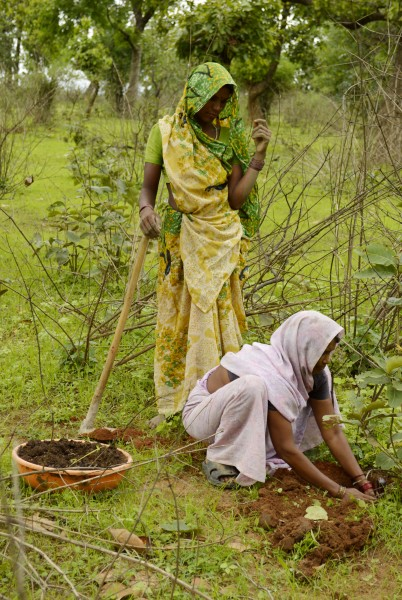 Women planting a tree, Umaria district, MP, India