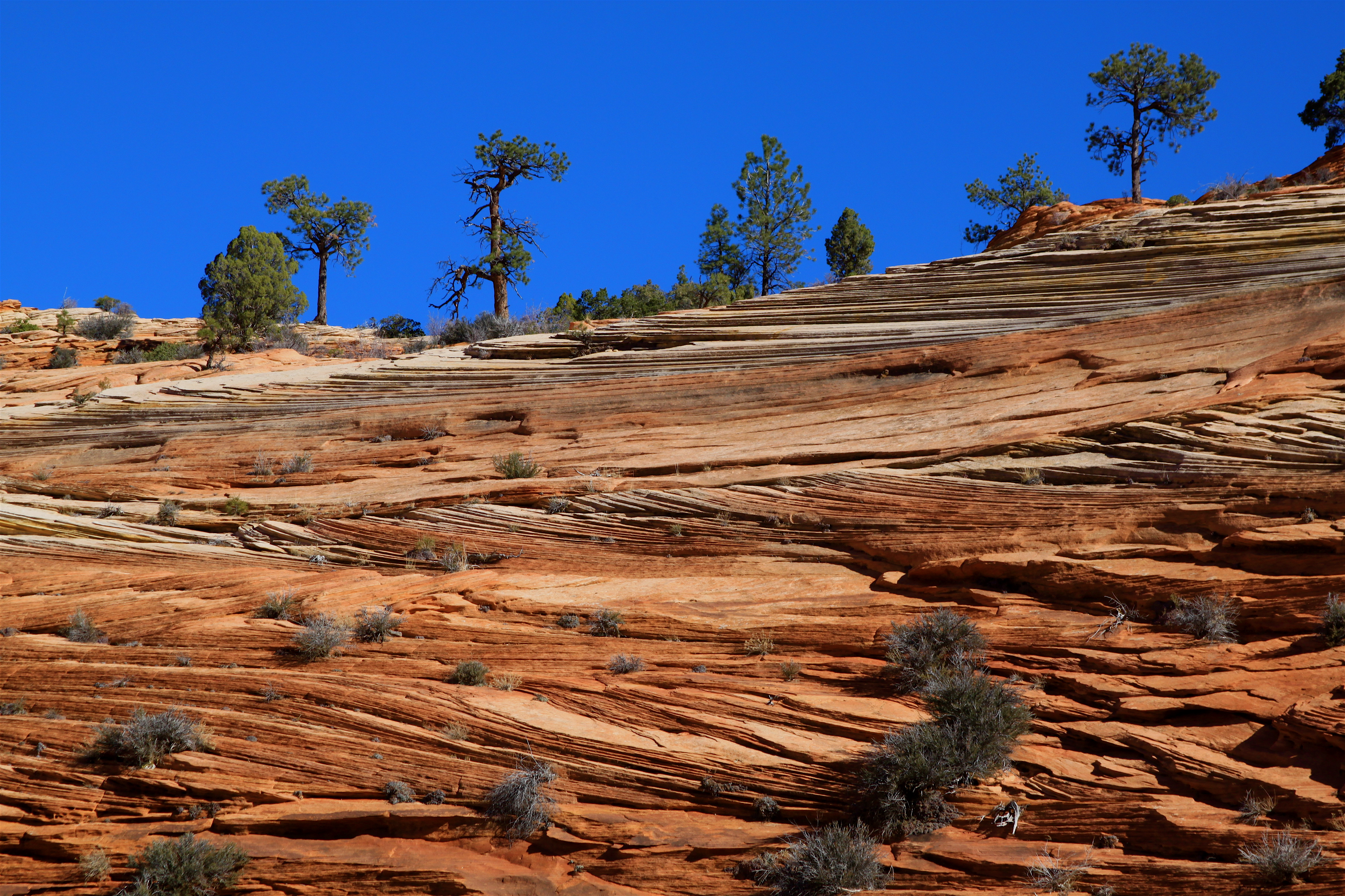 Sandstone showing Cross-bedding Zion National Park Utah USA