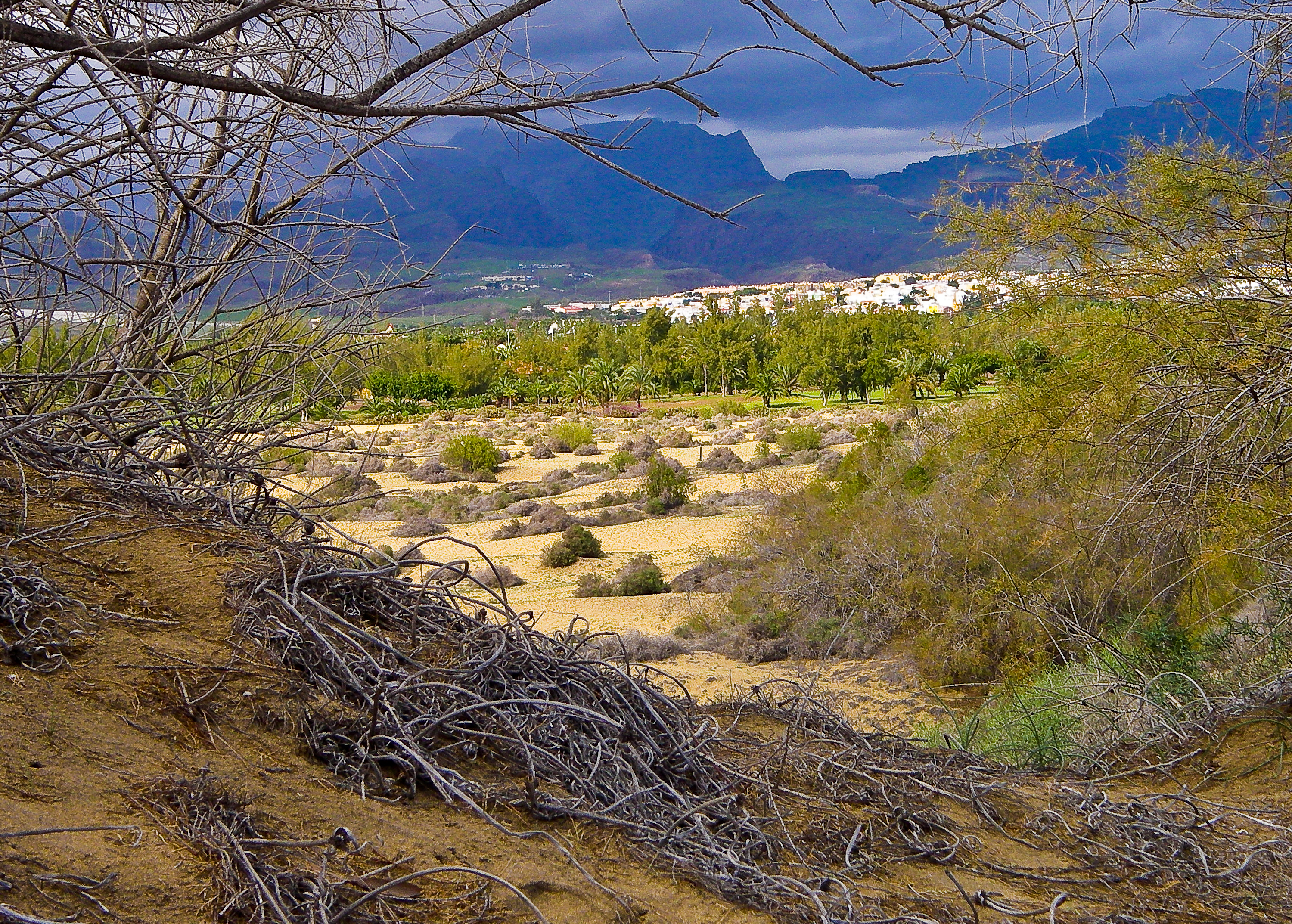 Scrub and dunes at Maspalomas Gran Canaria