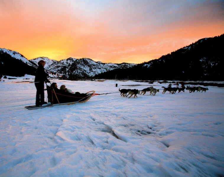 Sled dogs sunset
