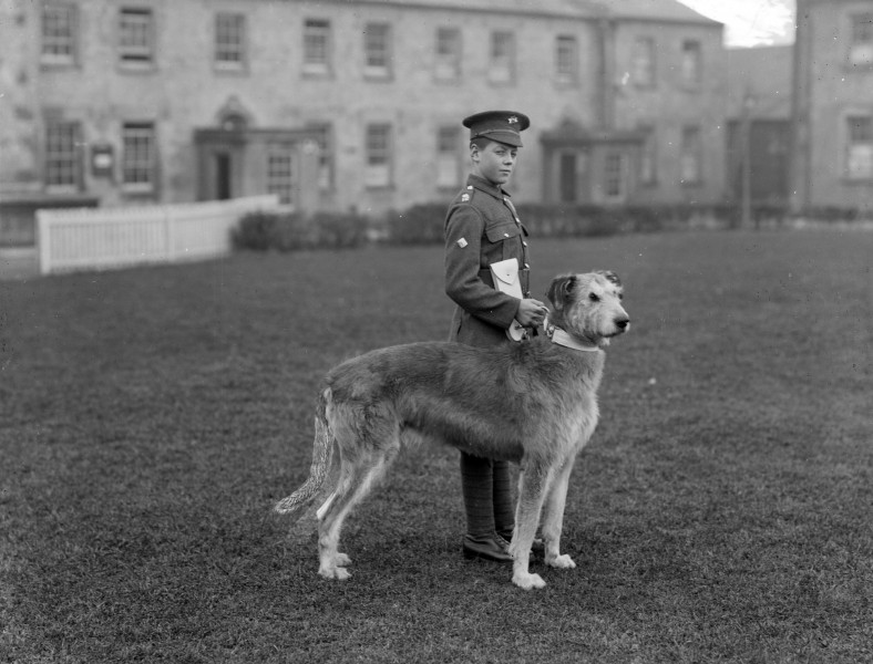 Irish Guards' Mascot - Leitrim Boy