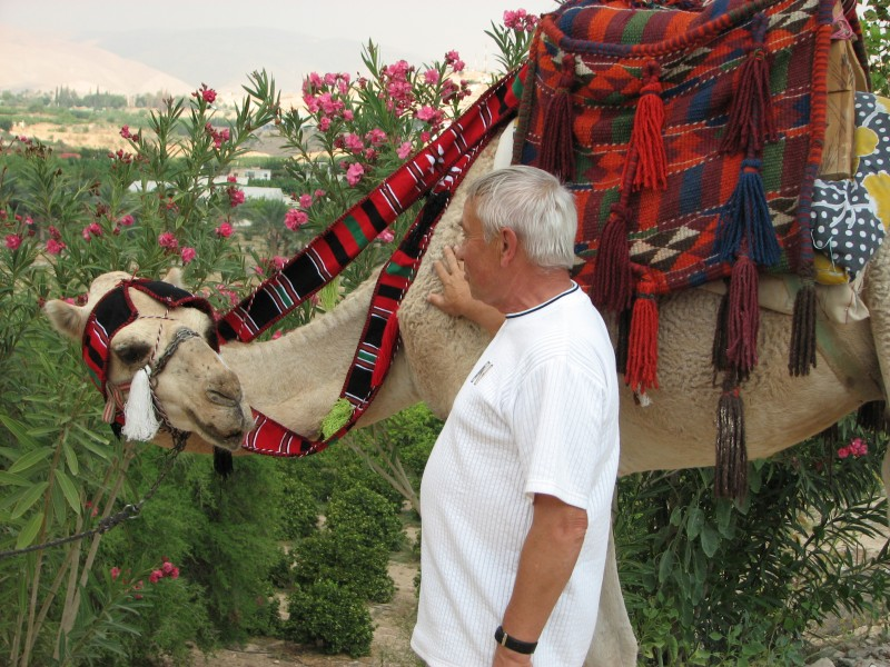 A man with a camel in Jericho, Israel, picture 7.