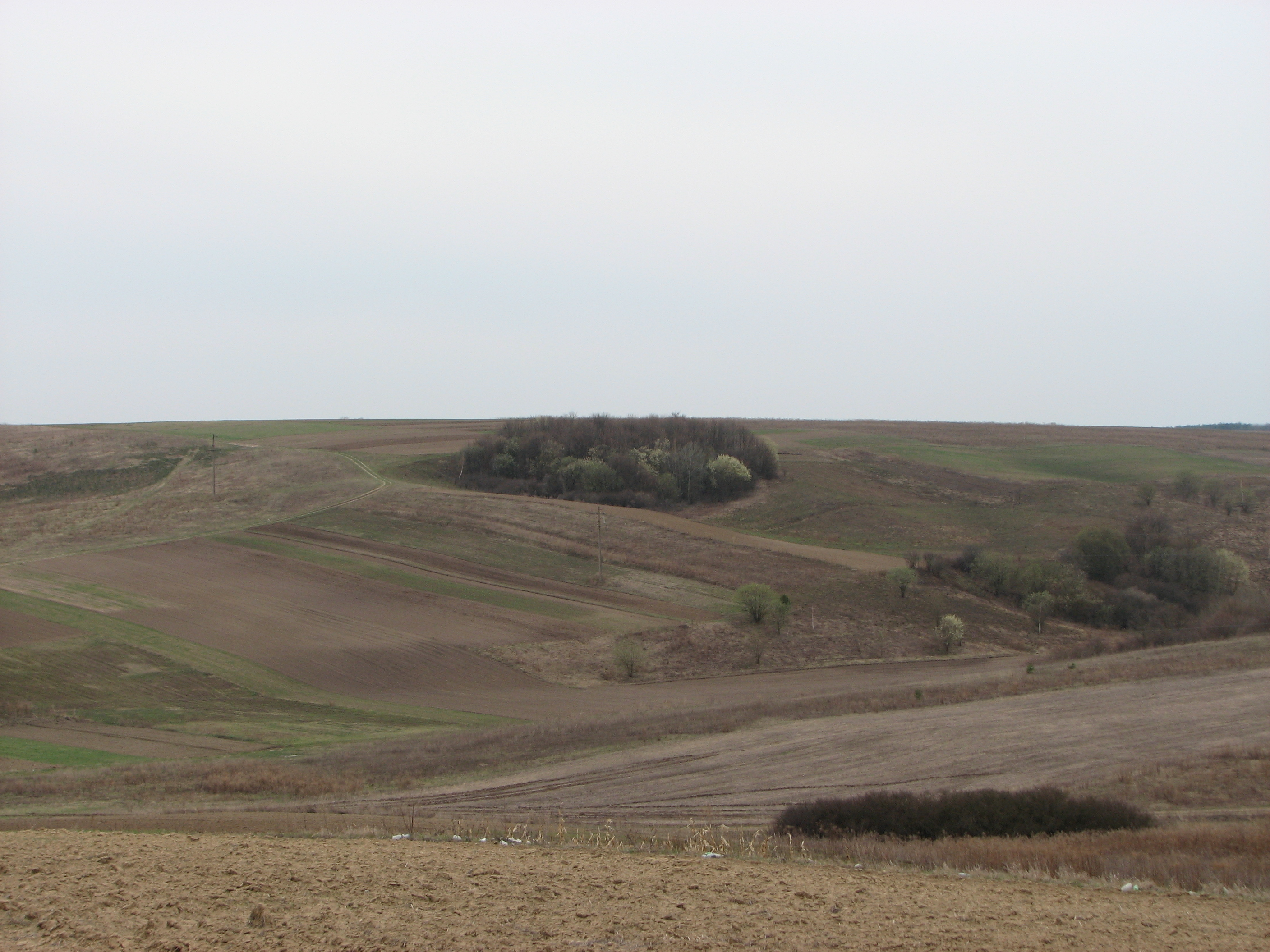 Fields and woods near Ostroh