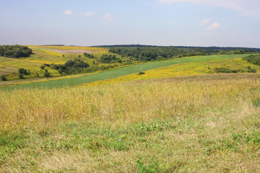 Fields and meadows around Ostroh town, photo 7