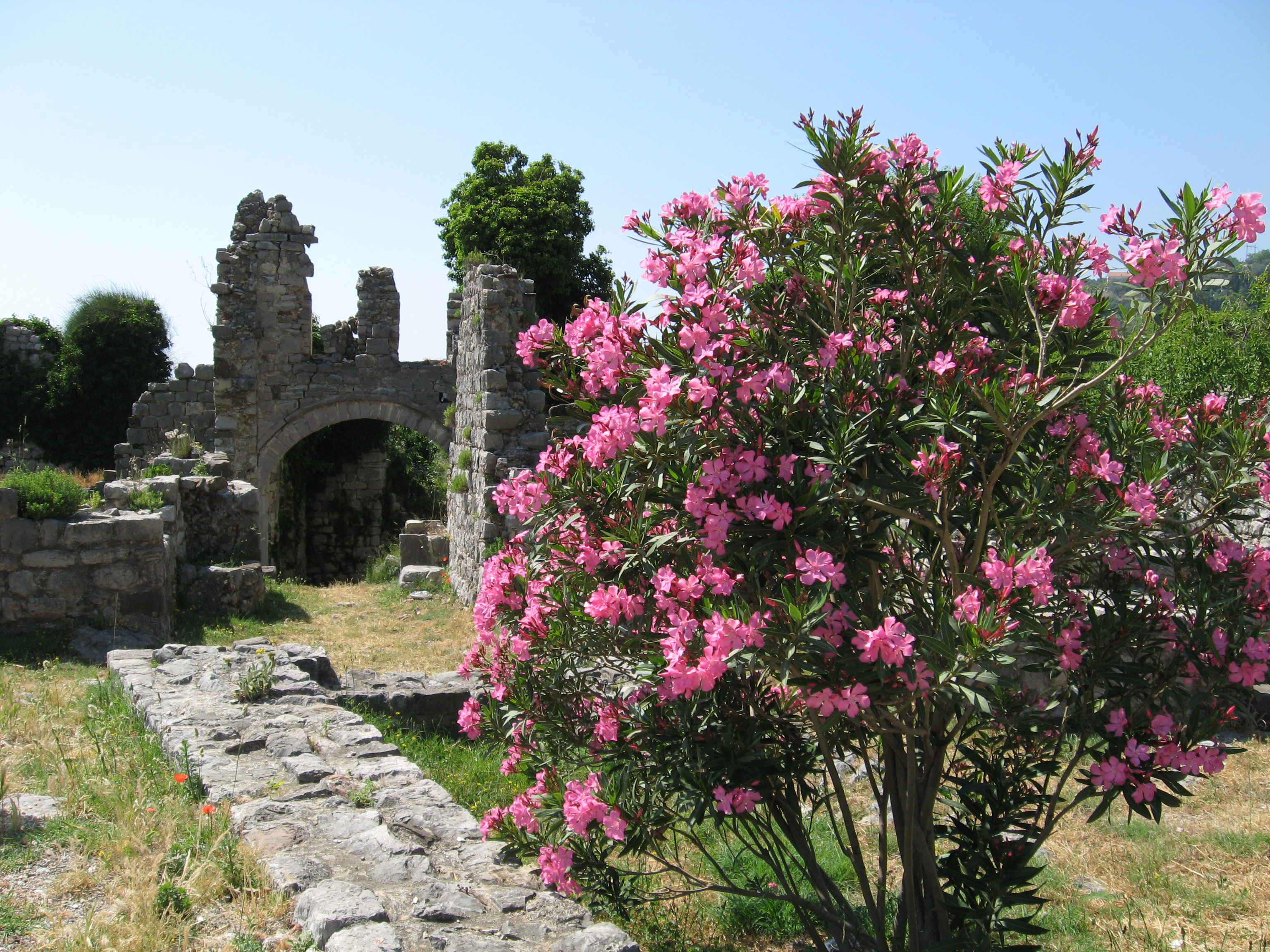 Blossoming bush in Bar town, Montenegro, Europe, picture 16