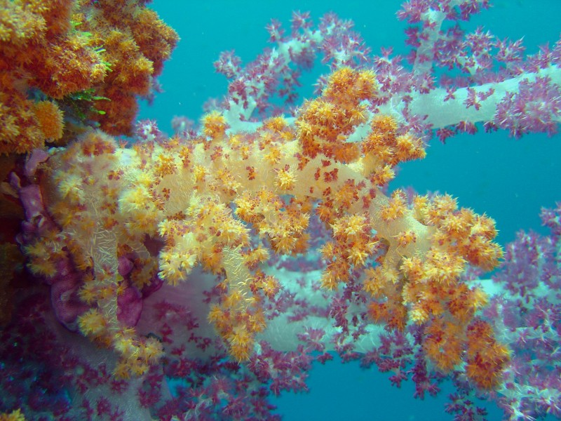Reef0898 - Flickr - NOAA Photo Library