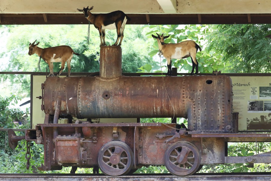 Historic locomotive hosting goats in Don Khon, Si Phan Don, Laos
